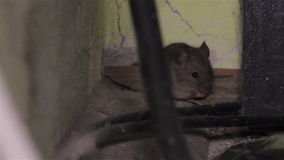 Mouse in the house stock video footage