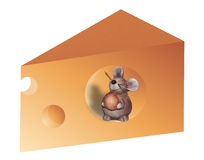 Mouse inside Cheese Royalty Free Stock Photos