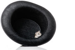 Mouse inside hat Royalty Free Stock Image