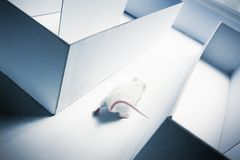 Mouse inside a labyrinth wih dramatic lighting Stock Photography
