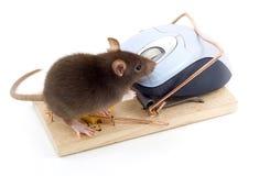 Mouse intelligente fotografie stock libere da diritti
