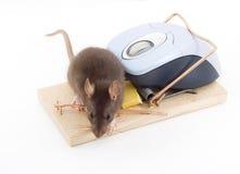 Mouse intelligente fotografia stock libera da diritti