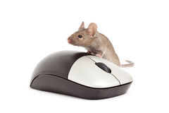 Mouse isolated on white stock photo