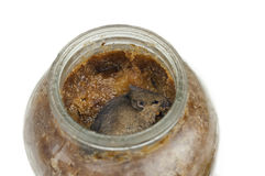 Mouse In Jar Royalty Free Stock Images