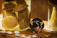 Mouse with jar and mushroom in basement Royalty Free Stock Photos