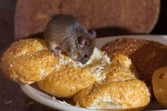 Mouse in the kitchen stock image