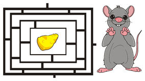 Mouse and labyrinth. Rat stand and want find a cheese on the labyrinth Royalty Free Stock Photo