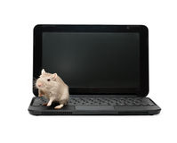 Mouse On Laptop Stock Image