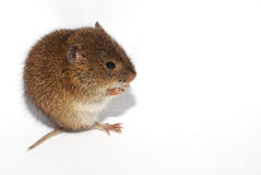 Mouse left Stock Photo