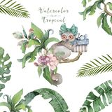 Mouse lemur. Hand drawn cute watercolor cartoon mouse lemur on tree with jungle leaves on white background