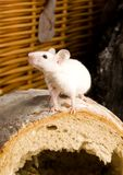 Mouse in a loaf Stock Photos