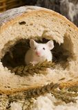 Mouse in a loaf Stock Photography