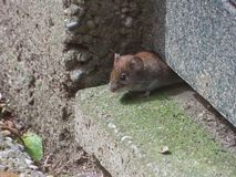 Mouse. Look under the door to the camera stock images