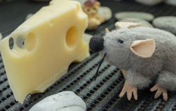 Mouse looking at cheese royalty free stock photos