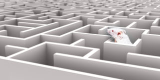 Mouse Maze. White Mouse in White maze looking over walls Stock Photography