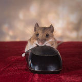 Mouse of mouses Stock Image