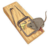Mouse in a mousetrap. Royalty Free Stock Photography