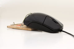 Mouse in mousetrap Stock Photography