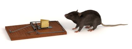 Mouse with mousetrap Royalty Free Stock Images