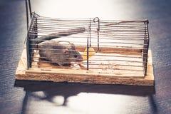 Mouse nel mousetrap della gabbia Fotografie Stock