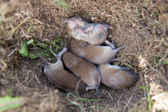 Mouse nest Stock Image