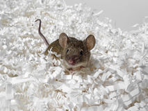 Mouse and paper Stock Images