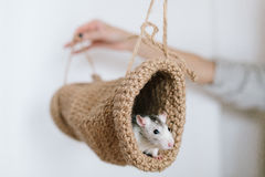 Mouse peeking out of the tunnel knitted on a white background Stock Image