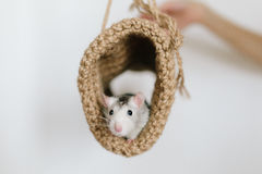 Mouse peeking out of the tunnel knitted on a white background Stock Photo