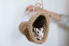 Mouse peeking out of the tunnel knitted on a white background Stock Photos