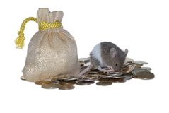 Mouse on pile of money. Little gray mouse sitting on pile of money, isolated Royalty Free Stock Image