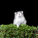 Mouse on plant. Mouse standing on a plant stock photography