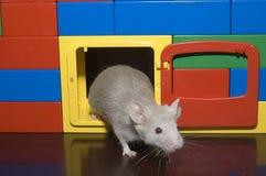 Mouse in porta Fotografia Stock Libera da Diritti