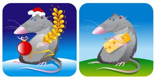Mouse rat Stock Photos