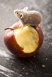 Mouse and red apple. Close up on little mouse and apple royalty free stock photos