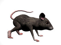 Mouse Right Royalty Free Stock Photo
