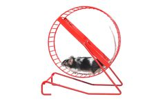 Mouse  in rotatory wheel Stock Photography
