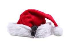 Mouse on Santa Claus hat stock image