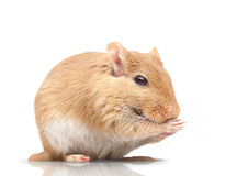 The mouse Stock Photos