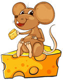 A mouse sitting above a cheese Stock Image