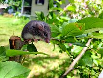 Mouse sitting on plant. Stock Photography
