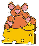 Mouse sleeping and hugging one piece of cheese Stock Image