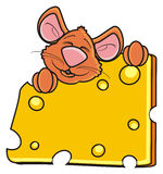 Mouse sleeping and hugging one piece of cheese Stock Images