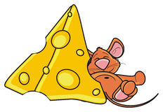Mouse sleeping and hugging a piece of cheese Royalty Free Stock Photos