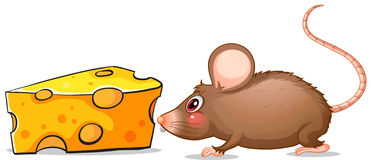 A mouse and a slice of cheese Stock Images