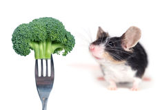Mouse smelling a broccoli Stock Photos