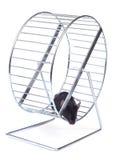 Mouse su una rotella di esercitazione Immagini Stock