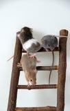 Mouse sulla scala del giocattolo Fotografia Stock