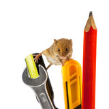 Mouse on tools Royalty Free Stock Photography