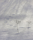 Mouse tracks in the snow. Russia Royalty Free Stock Image