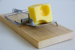 Mouse trap. Bait on mouse trap Royalty Free Stock Photos